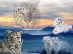 Fonds d'écran Animaux Tigres blancs