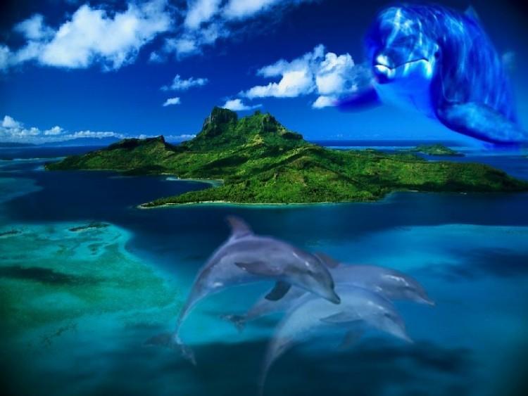 Fonds d'écran Animaux Vie marine - Dauphins dauphins