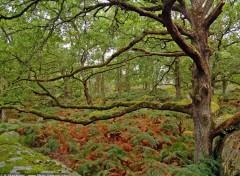 Fonds d'écran Nature Chêne dans la forêt de Fontainebleau