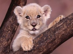 Wallpapers Animals No name picture N°152708