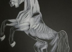 Wallpapers Art - Pencil Musculature