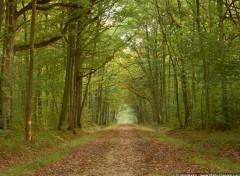 Fonds d'écran Nature Balade automnale en forêt de Dourdan