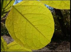 Wallpapers Nature Vert d'automne