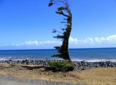 Fonds d'écran Nature arbre de l'etrange