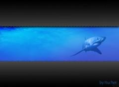 Fonds d'écran Animaux requin vista