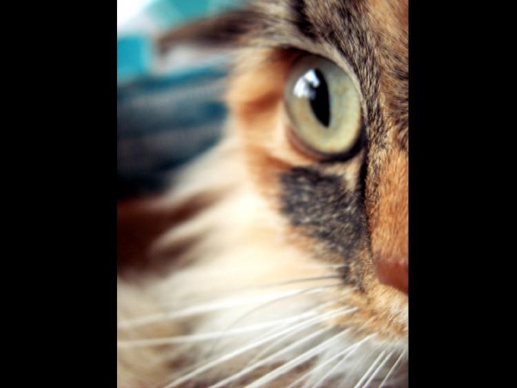Fonds d'écran Animaux Chats - Chatons my cat