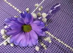 Fonds d'écran Nature Marguerites violet