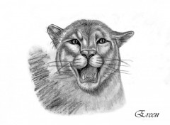Wallpapers Art - Pencil Puma