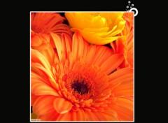 Fonds d'écran Nature Orange Flower