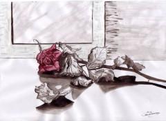 Wallpapers Art - Painting rose fanée
