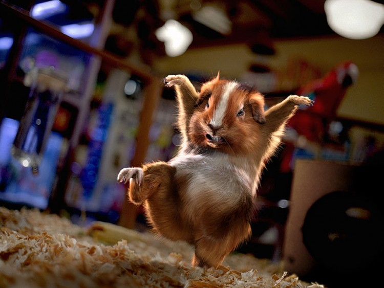 Wallpapers Digital Art Animals Hamster Kung-Fu