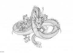 Fonds d'écran Manga Dragon 01
