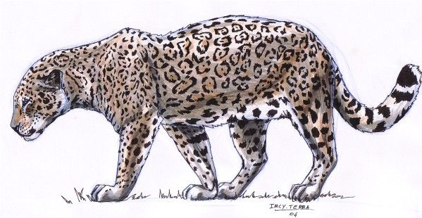 Wallpapers Art - Pencil Animals - Felines Jaguar