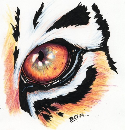 Wallpapers Art - Pencil Animals - Felines Oeil de tigre