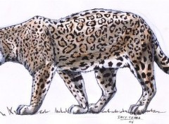 Fonds d'écran Art - Crayon Jaguar