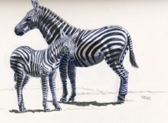 Wallpapers Art - Pencil zébres