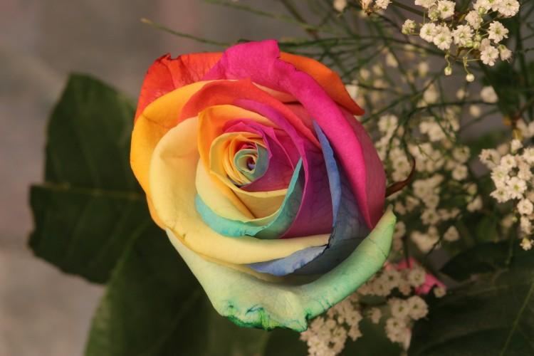 Fonds d'écran Nature Fleurs Tout en couleurs.