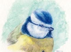 Fonds d'écran Art - Crayon mésange bleu