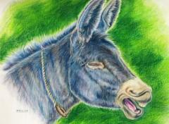 Fonds d'écran Art - Crayon Ane