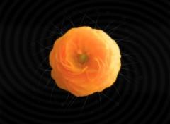 Fonds d'écran Art - Numérique Flower Dream