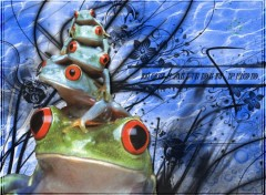 Wallpapers Animals grenouille prod