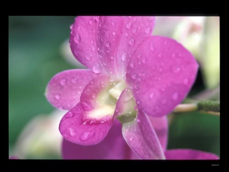 Fonds d'écran Nature Fleurs Wallpaper N°174776