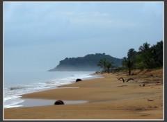 Fonds d'écran Nature Salines de Cayenne