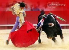 Fonds d'écran Sports - Loisirs corrida