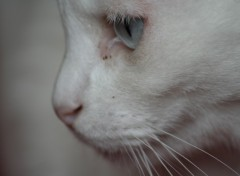 Fonds d'écran Animaux mon ti chat Bowi