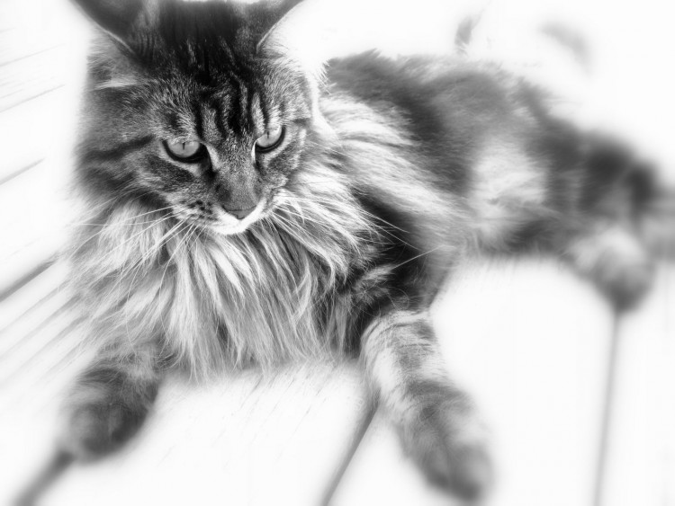 Wallpapers Animals Cats - Kittens Vita