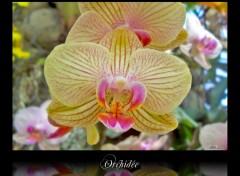 Wallpapers Nature Orchidée