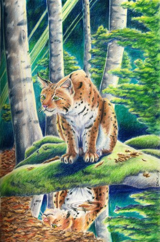 Fonds d'écran Art - Crayon Animaux - Félins Lynx