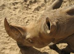 Wallpapers Animals Rhinoceros