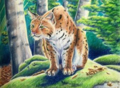 Fonds d'écran Art - Crayon Lynx