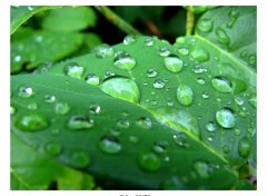Wallpapers Nature Après la pluie