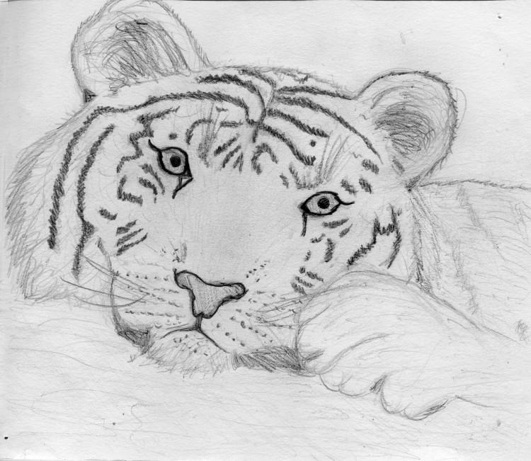 Fonds d'écran Art - Crayon Animaux - Tigres Tigre crayon