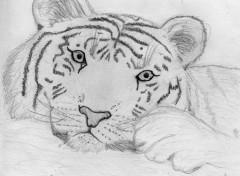 Wallpapers Art - Pencil Tigre crayon
