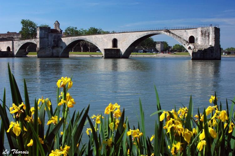 Wallpapers Trips : Europ France > Provence-Alpes-Côte d'Azur Iris