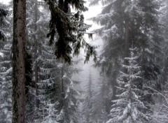 Wallpapers Nature Courchevel sous la neige