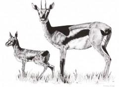 Fonds d'écran Art - Crayon Gazelle Et Son Jeune