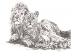 Fonds d'écran Art - Crayon Les Rois Lions