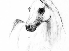Wallpapers Art - Pencil Cheval