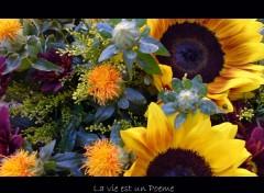 Fonds d'écran Nature Fleurs du Wall