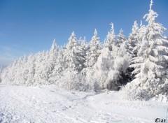 Fonds d'écran Nature Vosges enneigées