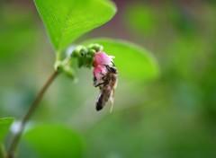 Fonds d'écran Animaux Nectar