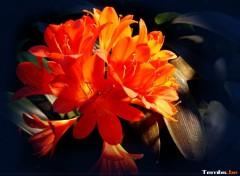 Fonds d'écran Nature Fleur Orange