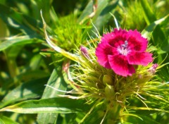 Fonds d'écran Nature Pink