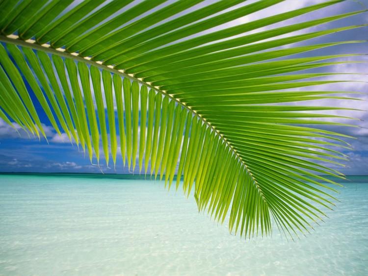 Fonds d'écran Voyages : Océanie Tahiti paradis
