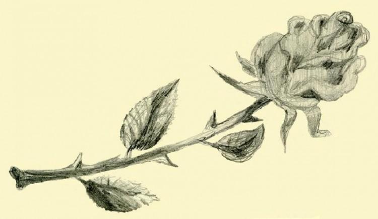 Fonds d'écran Art - Crayon Fleurs - Feuilles - Fruits Rose