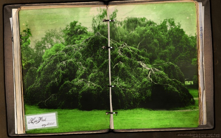 Wallpapers Trips : Europ Great Britain > London Hyde Park